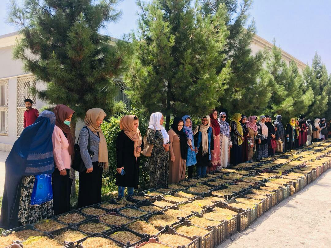 Photo of توزیع تخم زعفران برای ۵۰ تن از بانوان در ولایت بلخ