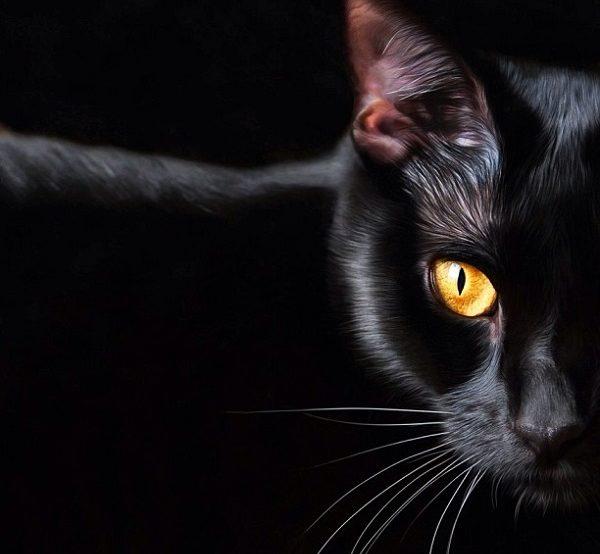 بازار گرم خریدوفروش پیشک/ گربه سیاه در کابل |خبرگزاری شانا|Shana ...