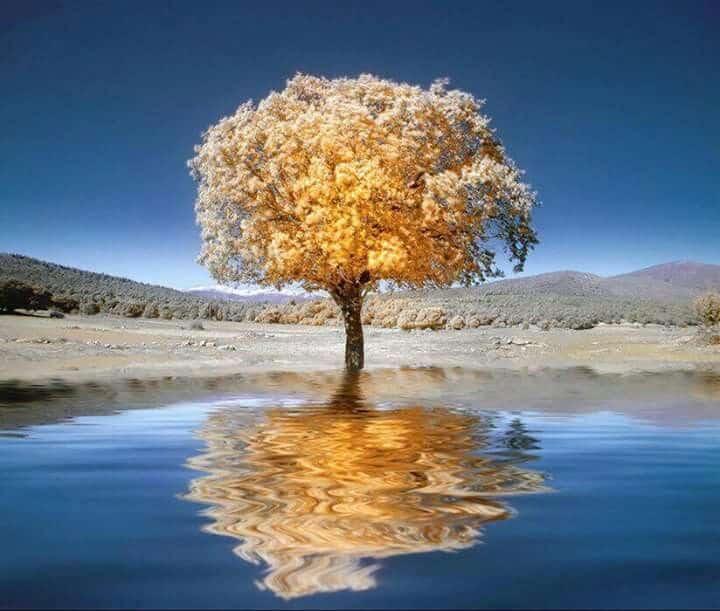 Photo of معرفی کامل عکاسی مادون قرمز؛ شاخهای جذاب از عکاسی
