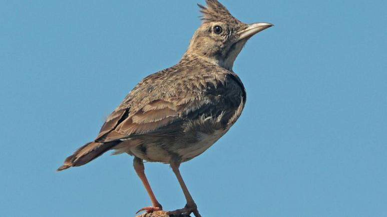 Photo of کشف پرندهای ۴۶ هزارساله در سیبری