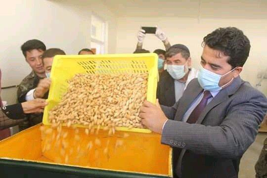 Photo of گشایش نخستین کارخانه بهرهوری بادام در ولایت دایکندی